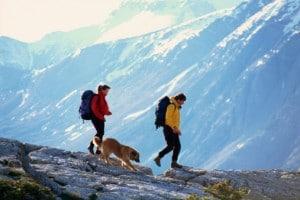 randonner-avec-chien