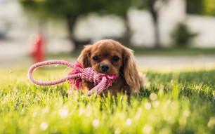 À quoi penser avant de partir en randonnée avec son chien ?